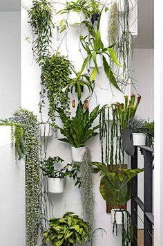 Wonderful Tricks: Artificial Plants Balcony Outdoor artificial garden tips.Large Artificial Plants Palm Trees artificial flowers for hair. Hanging Plants, Potted Plants, Garden Plants, Plants On Wall Indoor, Plants In Pots, Indoor Climbing Plants, Faux Plants, Shade Plants, Garden Deco