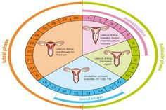 How You Can Prepare Your Body For Pregnancy Cycle Menstruel Ovulation Calculator Menstrual