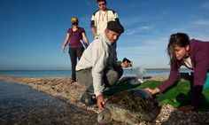 Ecotourism Helps Promote Sea Turtle Conservation in Mexico
