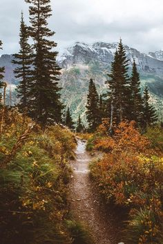 always follow the path less traveled, it makes for more interesting times - theme | into the wild - wanderlust - inspiration - wilderness - camping - hiking - hike - explore - adventure - photography - bucket list - mountains