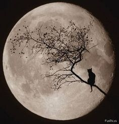 antique cat painting   Cat,moon,art,vintage,art,the,moon,halloween ...