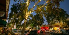 Carlsbad Village | The Preeminent Downtown of North County San Diego