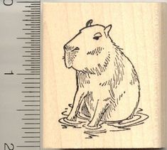 Amazon.com: Capybara Rubber Stamp: Arts, Crafts & Sewing