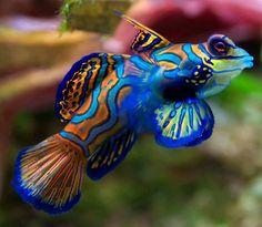 Así son los 50 animales más bellos del planeta - Entérate de algo