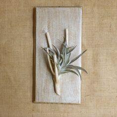 """Suspension pour Tillandsia """"fille de l'air"""" de notre fabrication artisanale et à base de bois recyclé tel que des palettes, afin de permettre à chacun d'intégrer le tillandsia à son intérieur. Chaque pièce est unique en son genre et complète la décoration intérieure moderne ou traditionnelle pour la maison et le bureau."""