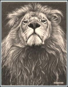 Head of the Family' - Lion - Fine Art Pencil Drawings