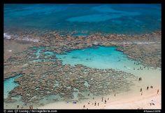 reefs of Hanauma Bay  II  Oahu island, Hawaii
