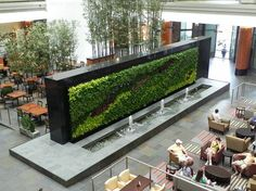 Living Green Walls: The Wallpaper of the Future is Alive!