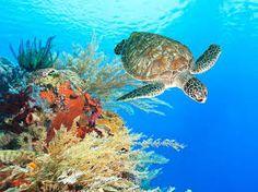 Afbeeldingsresultaat voor onderwater wereld