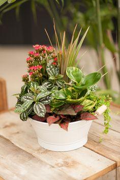 Stunning tropical tin planter from our wholesale department House Plants Decor, Plant Decor, Container Plants, Container Gardening, Aloe Plant Care, Indoor Tropical Plants, Plant Centerpieces, Dish Garden, Small Garden Design