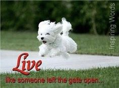 "now THAT'S what I'm talking about...  I love this pup!  ""Live like someone left the gate open!"""