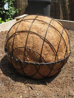 Step-by step succulent ball use ones bought other year and plant up with succulants
