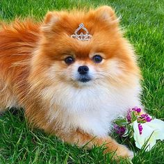"""2,416 Likes, 176 Comments - Monique&Ginger (@monique_ginger) on Instagram: """"My little prom queen...a sure sign of Spring! -------------------------------------------------…"""""""