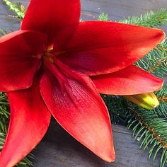"""We'll be open tomorrow morning The doors will be """"closed"""" since it's going to chilly. The heat will be on, coffee will be on and we'll be looking forward to seeing your smiling faces! You can still place holiday orders for Local Color, Smiling Faces, Looking Forward To Seeing You, Smile Face, January, Wellness, Doors, Canning, Coffee"""