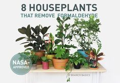 8 NASA-Approved Plants That Remove Formaldehyde by Branch Basics