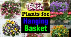 Learn about the Best Plants For Hanging Baskets. Hanging baskets filled with colorful flowers and plants are very showy and elegant and adorn any garden. You don& need a lot of space to display them, too! Container Flowers, Container Plants, Container Gardening, Indoor Gardening, Full Sun Flowers, Amazing Flowers, Colorful Flowers, Garden Web, Garden Plants
