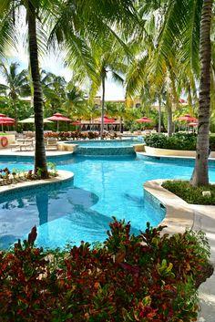 Palm trees around the pool. / Las palmas en la piscina.