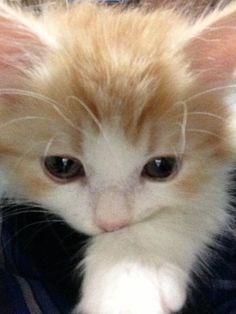 """""""Kittens carry tickles on their whiskers."""" --Jo Kittinger"""
