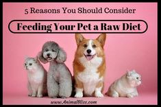 Five reasons you should consider feeding your pet a raw diet, based on research showing that raw diets are proven to be beneficial for pets. Food Dog, Cat Food, Carnivorous Animals, Winter Horse, Healing Codes, Animal Nutrition, Pet Nutrition, Switch Words, Magic Words