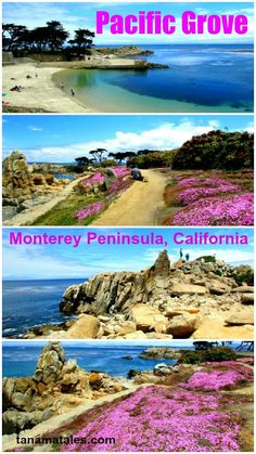 The Lovers Point Park in Pacific Grove (Monterey Bay, California) is surrounded by what can be described as a carpet of flowers.  Locals plants yellow and pink flowers to attract Monarch Butterflies who pass thru here every winter during their annual migration.