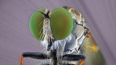 These bug-eyed monsters are in fact everyday insects and spiders in extreme close-up - Mirror Online