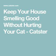 Keep Your House Smelling Good Without Hurting Your Cat - Catster