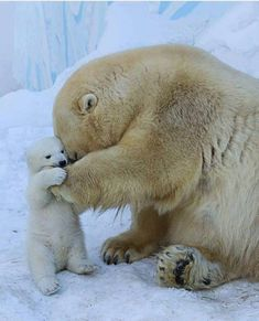 Fur babies, baby animals, animals and pets, cute animals, animals wit Cute Baby Animals, Animals And Pets, Funny Animals, Wild Animals, Baby Polar Bears, Baby Pandas, Panda Bears, Bear Cubs, Baby In Snow