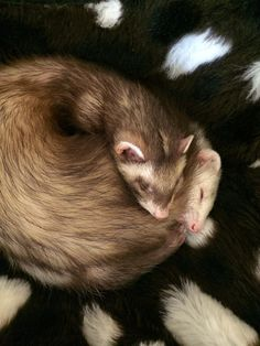 Ethel and Patches snoozing after playtime and nom noms ❤️