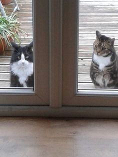 Let us in!
