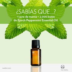 Dive into the refreshing, sharp aroma of Epoch Peppermint essential oil at home or on the go. Upper Lip, Epoch, Diy Beauty, Aromatherapy, Peppermint, Helpful Hints, Essential Oils, Remedies, Things To Come