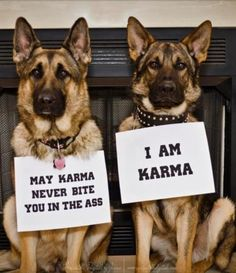 Karma! GSD.... Perfect for all the people who are dumping their GSD's like crazy lately!!!
