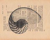Pag.78, Nautilus, stampa in scala di grigio, posizione pagina orizzontale.