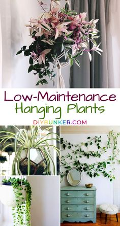Hanging Plants Indoor Gardening Enthusiasts Love These low maintenance hanging plants are PERFECTION! If you're looking for plants that hang and hang well, you're going to be in heaven!These low maintenance hanging plants are PERFECTION! Inside Plants, Ivy Plants, Garden Plants, Shade Plants, Cactus Plants, Tropical Plants, Cactus Decor, Cactus Art, Tomato Plants