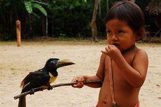Aboriginal and Tribal Nation News    Amazon rainforest