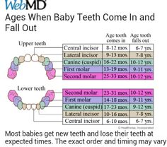 Ages when baby teeth come in and fall out.good to know, but has to be relative as my niece is almost 7 months and has 8 teeth already full in. Also - teeth not falling out til 6 or I think I lost my first at Baby Health, Kids Health, Baby Boy, Baby Kids, Baby Girl Names, Boy Names, Baby Crib, My Bebe, Adolescents