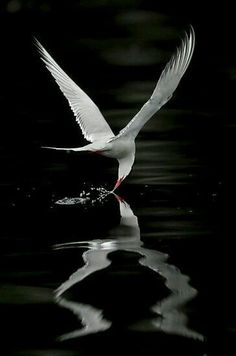 The perfect photo of this birds reflection on the water. Stunning.