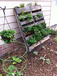 Gardening how to make a vertical garden with Pallet (instructions) Davis vertical strawberries to save space?how to make a vertical garden with Pallet (instructions) Davis vertical strawberries to save space?