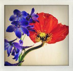 flowers // Vinoodh
