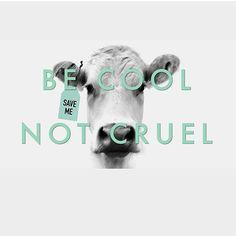 why finance animal cruelty, be cool not cruel #vegan
