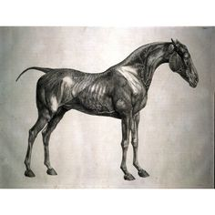 George Stubbs, Anatomy of the horse 1766