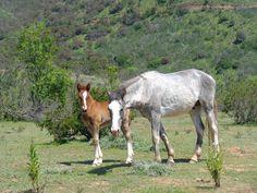 caballos en el cerro