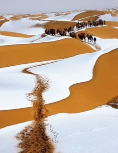 Winter snow, Sahara desert. I never would have dreamed this in a million years. Didn't know that is snows in the Sahara.