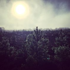 Cobwebs and shadows in the foggy sun #aviemore #moors #fog