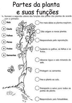 Anotações: Partes da planta e suas funções