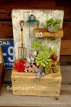 Cute succulent arrangement