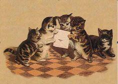 kittens reading mail