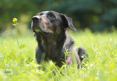Dog Portrait Laika by MacroUniverse. Please Like http://fb.me/go4photos and Follow @go4fotos Thank You. :-)