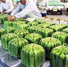 Only in Japan! - Oddee.com (japan funny photos) much easier to slice I suppose..