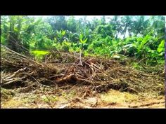 21 cent residential plot near Mannuthy , Thrissur