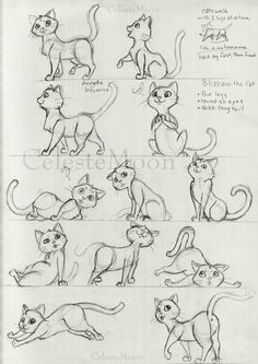 Blizzard the Cat Concept Poses by ~CelesteMoon on deviantART